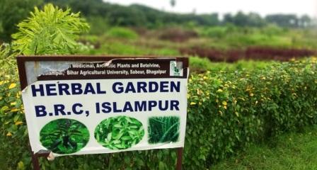 ISLAMPUR PAN HURBAL GARGEN • Nalanda Darpan / नालंदा दर्पण : गाँव-जेवार की बात। • गाँव-जेवार की बात।